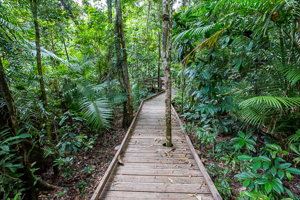 The path we walked through the Daintree Rainforest.