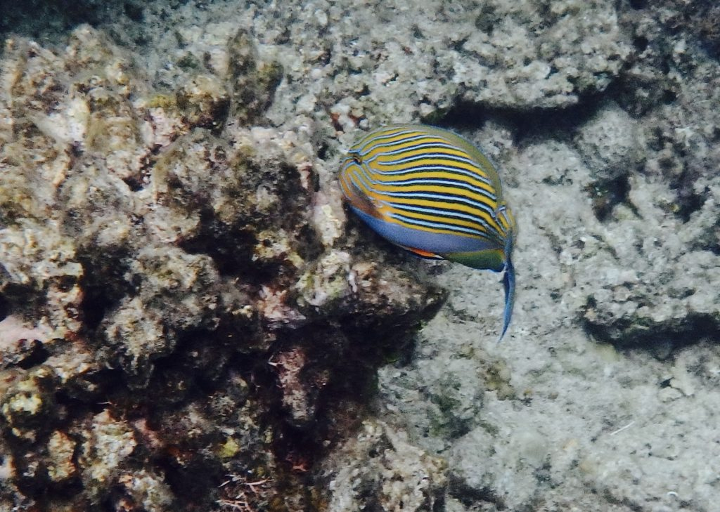 One of the colorful fish that we saw at the reef.